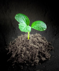 Seedling of Hope